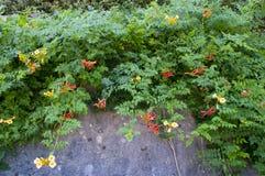 Hangende de Zomer Rode en Gele Bloemen Stock Foto's