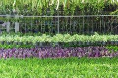 Hangende die mand met bloemen in tuin wordt gevuld Royalty-vrije Stock Foto
