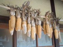 Hangende droge maïskolven stock foto's