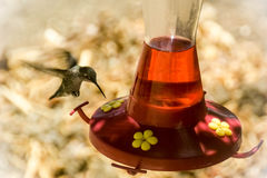 Hangende kolibrie royalty-vrije stock afbeelding