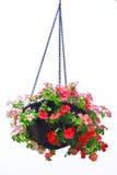 Hangende mand van bloemen Stock Foto's
