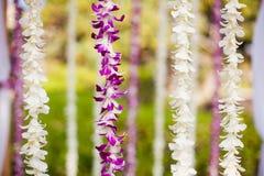 Hangende orchideeën Stock Foto's