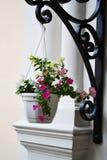 Hangende pot met bloemen Royalty-vrije Stock Foto