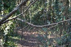 Hangende tak van boom royalty-vrije stock afbeeldingen
