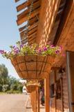 Hangende vaas van bloemen Stock Afbeeldingen