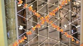 Hangende Vlinders, die zich in vorming bewegen, alsof zij in leven zijn stock footage