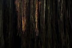 Hangende wortels Royalty-vrije Stock Foto