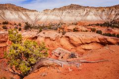 Hangging on the cliff at Kodachrome Basin State Park stock photography