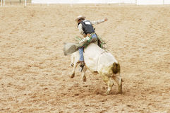 Hanging on 3. A bull rider hangs on for 8 seconds to receive a score at a rodeo Royalty Free Stock Image
