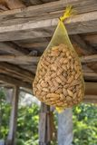 Hanging almond in nylon net bag. At a market stock photography