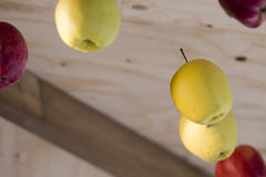 Hanging apples Royalty Free Stock Images