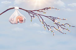 Hanging baby branch Royalty Free Stock Photo