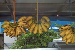 Hanging bananas Stock Photo