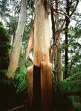 Hanging bark Royalty Free Stock Photos