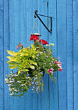 Hanging basket on blue fence. Photo of a hanging basket with a variety of pretty flowers against a french blue fence panels royalty free stock images
