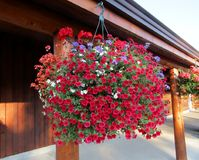 Hanging basket filled with red petunias, geraniums and lobelias Stock Image