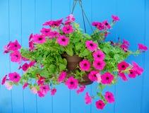 Hanging basket filled with vibrant pink petunias. Royalty Free Stock Image