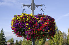 Hanging basket flower Stock Photo