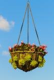 Hanging basket of flowers Stock Image