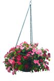 Hanging basket of flowers Stock Images