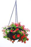 Hanging basket of flowers Stock Photos