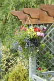 Hanging basket of flowers. Hanging basket full of pretty flowers on a garden pergola stock image
