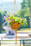 Hanging basket of flowers Royalty Free Stock Photos