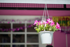 Hanging basket of flowers Stock Image