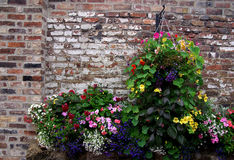Hanging basket with flowers Stock Photos
