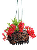 Hanging basket of flowers isolated on white background Stock Images