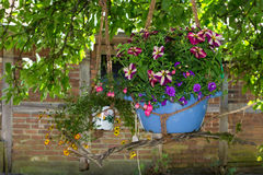 A hanging basket with fuchsia and petunia homeplants. A hanging basket with fuchsia and petunia homeplants placed at a old tree Royalty Free Stock Images