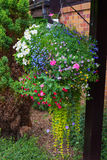 Hanging basket full of colorful summer plants. Stock Photo