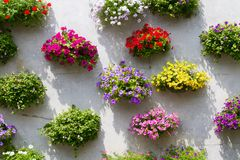 Hanging basket with multi colored flowers Stock Images