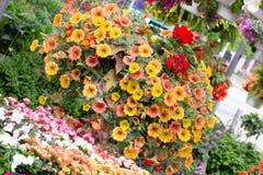 Hanging basket, orange, yellow petunia royalty free stock photos