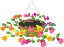 Hanging basket of petunia flowers. A vector illustration of a hanging flower basket full of various colored trailing petunias Stock Photo