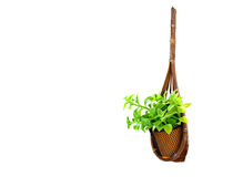 Hanging basket plant Stock Photography