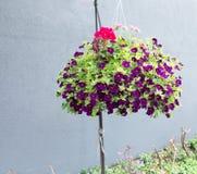 Hanging basket Stock Images