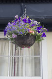 Hanging Basket Royalty Free Stock Photography