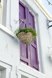 Hanging Basket Stock Images