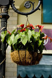 Hanging basket Stock Image