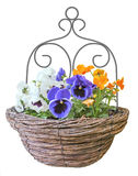 Hanging Basket. Wicker hanging basket with violets and White background Royalty Free Stock Images