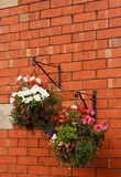 Hanging baskets. Overflow with flowers bracketed on a traditional red brick wall Royalty Free Stock Images