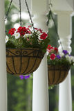 Hanging Baskets. Two hanging baskets outside home hanging from rafters Royalty Free Stock Photo