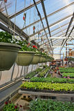 Hanging Baskets and Bedding Plants 2 Royalty Free Stock Image