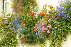 Hanging baskets Royalty Free Stock Image