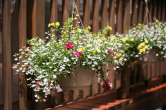 Hanging baskets at cottage on sunny day Stock Images