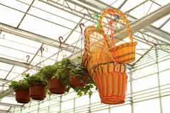 Hanging baskets in a flower market Stock Photography