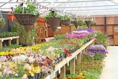 Hanging baskets nursery plants Royalty Free Stock Image