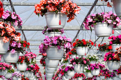 Hanging baskets Stock Image