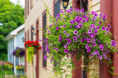 Hanging Baskets royalty free stock photography